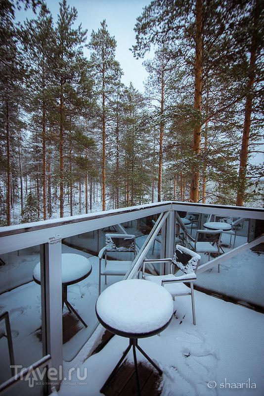 Секреты шведского леса