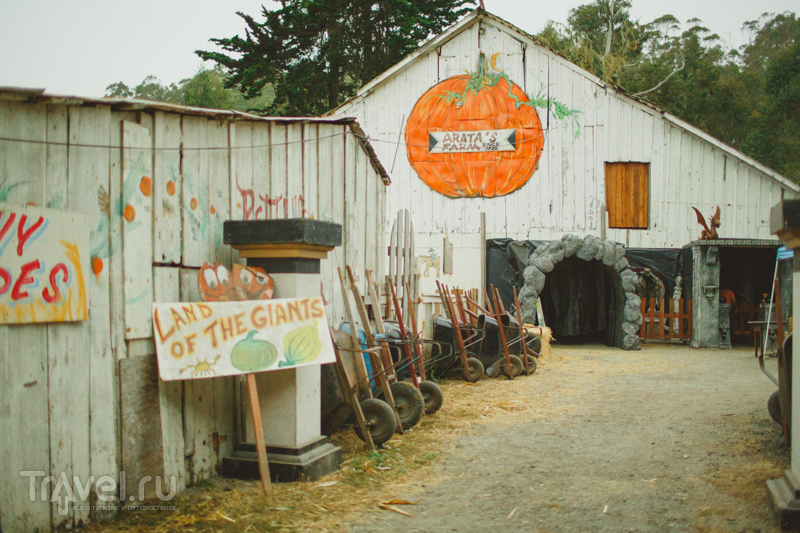 The Arata Pumpkin Farm