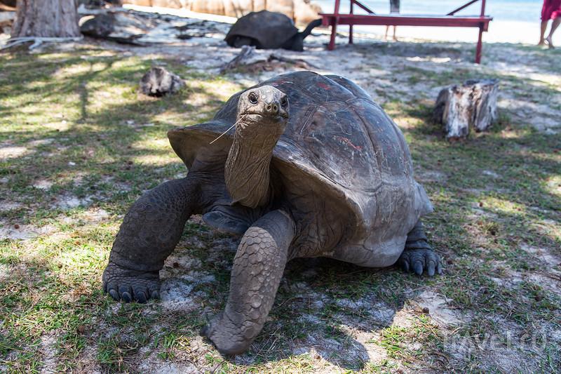 Гигантские черепахи Сейшельских островов / Фото с Сейшел