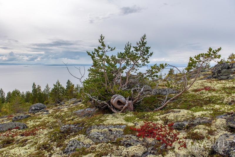"""Белое море. Путешествие по """"заливу змей"""" / Фото из России"""