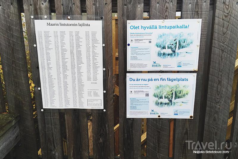 Велосипедная прогулка в Эспоо / Фото из Финляндии