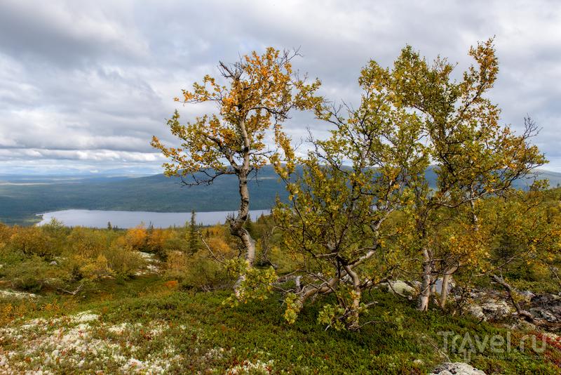 Путешествие на землю Саамов / Фото из России