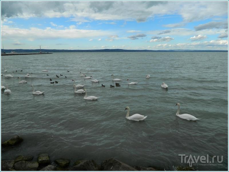 Шиофок / Фото из Венгрии
