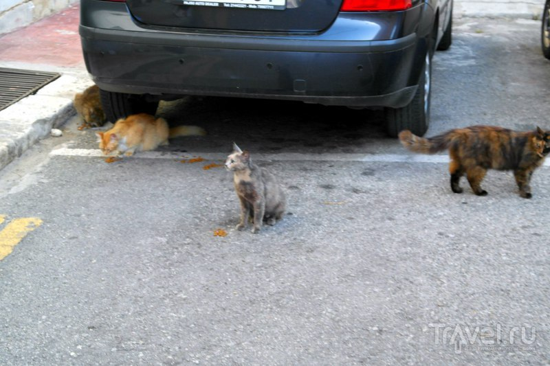 Флориана. Мальта - Флорианские коты и немного города / Мальта