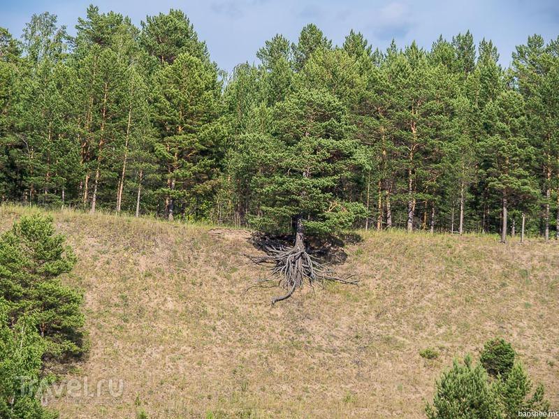 Енисей, от порога до Ангары / Фото из России