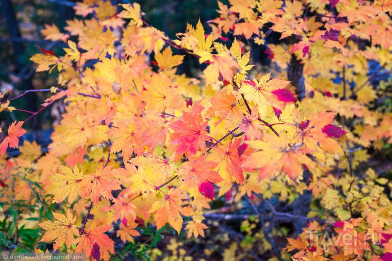 Осень на горе Ольховой. Приморский край / Фото из России