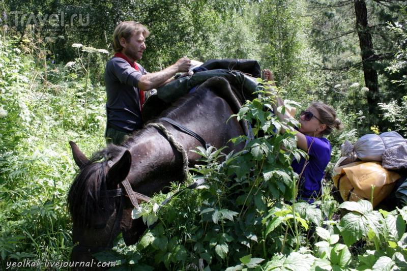По Горному Алтаю на конях. Возвращение на турприют Аркадия / Россия