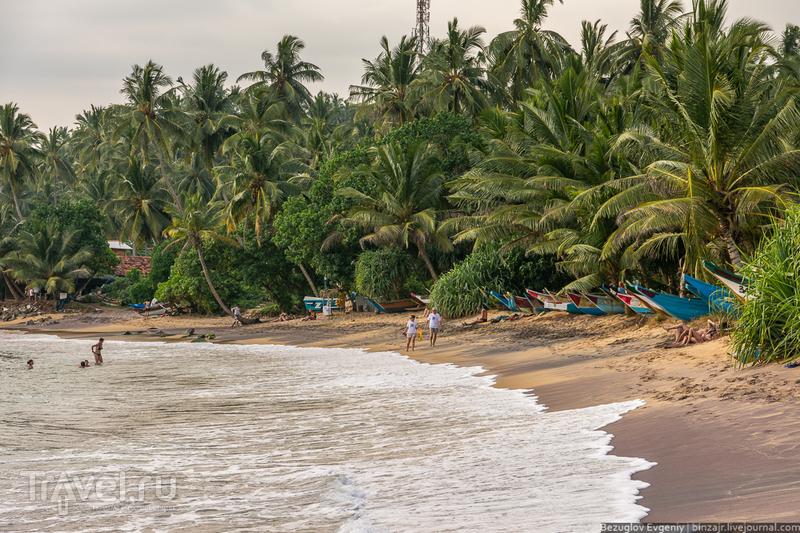 Шри-Ланка. Мирисса / Фото со Шри-Ланки