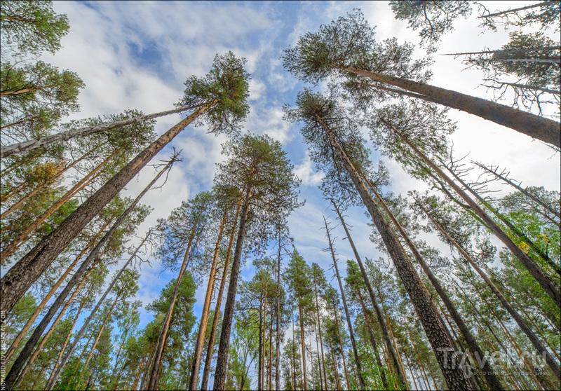 Корабельная чаща: экспедиция в заповедный лес по местам Михаила Пришвина / Фото из России