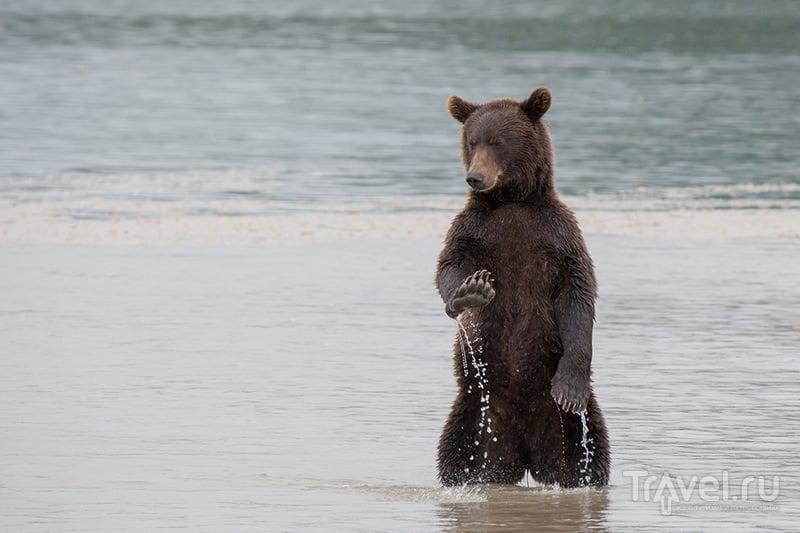 Первозданная Камчатка. Земля медведей / Фото из России