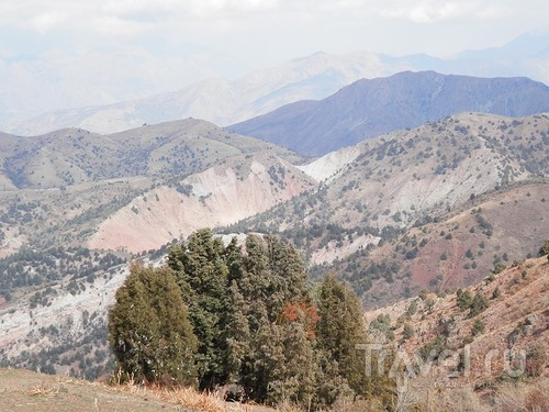 А Чимганские горы царят вдалеке и безумно прекрасны собою / Узбекистан