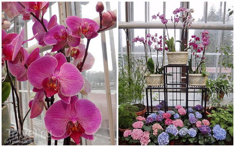 Юг на Севере. Ботанические сады Хельсинки / Финляндия