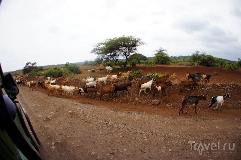 Племя Кадога, Озеро Эяси, Танзания / Танзания