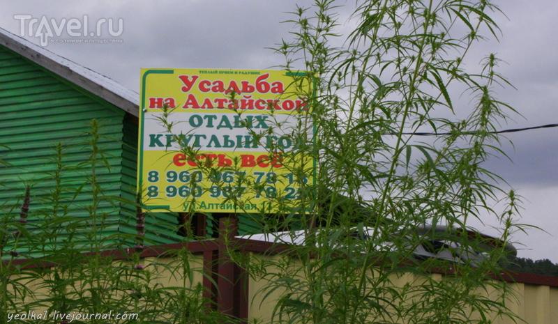 По Горному Алтаю на конях. Чемальский дозор / Россия