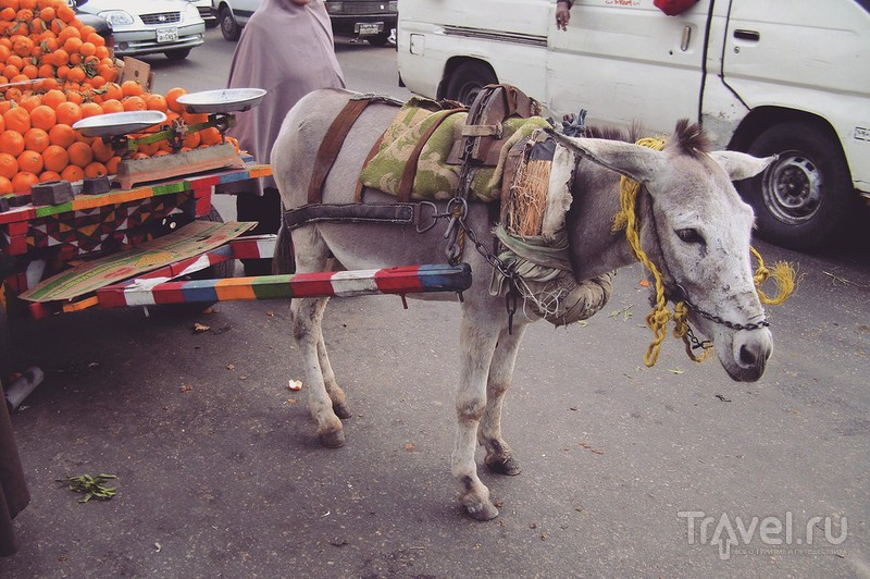 Общественный транспорт и улицы Египта