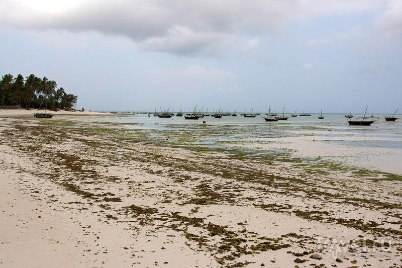 Занзибар. Отливы / Фото из Танзании