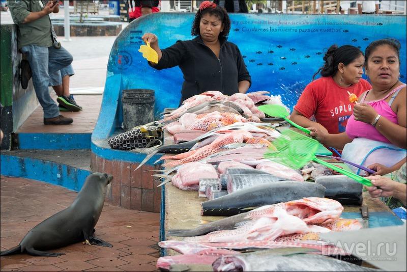 Рыбный рынок на Санта Крусе / Фото из Эквадора