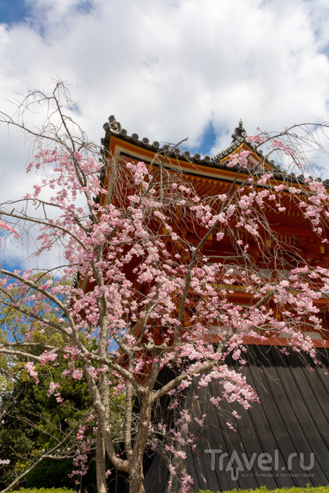 Киото. Западные храмы, Золотой павильон и самый знаменитый сад камней / Фото из Японии