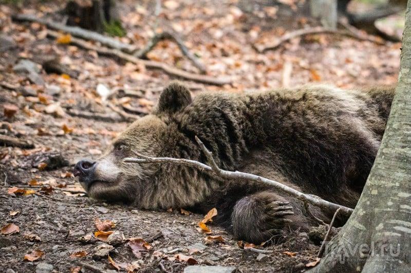 Ехали медведи на велосипеде... / Болгария