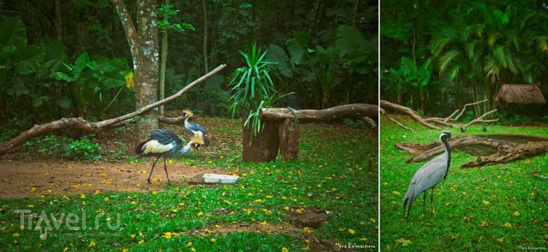 Засунуть любопытный нос в Бразилию: Водопады Игуасу и Парк птиц / Фото из Бразилии