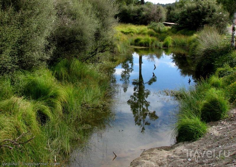 В стране антиподов. Озеро Бруннер / Фото из Новой Зеландии