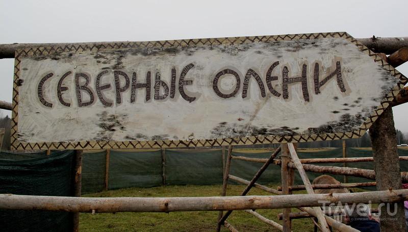 В гостях у кочевников / Россия