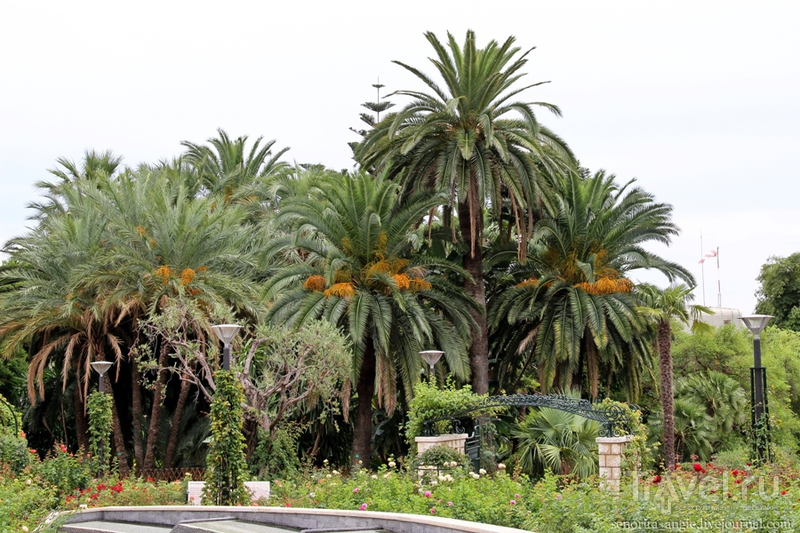 Розарий принцессы Грейс, Монако / Монако