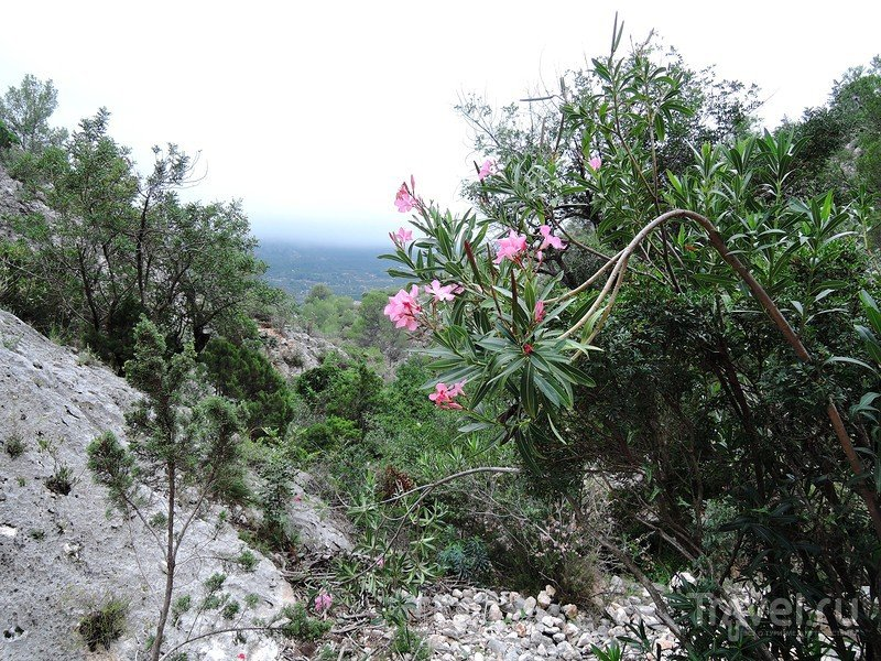 Vall de Gallinera. Наскальные рисунки возле Бениали / Фото из Испании