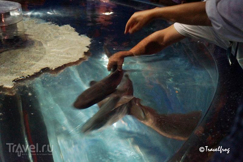 Океанографический музей в Монако / Фото из Монако