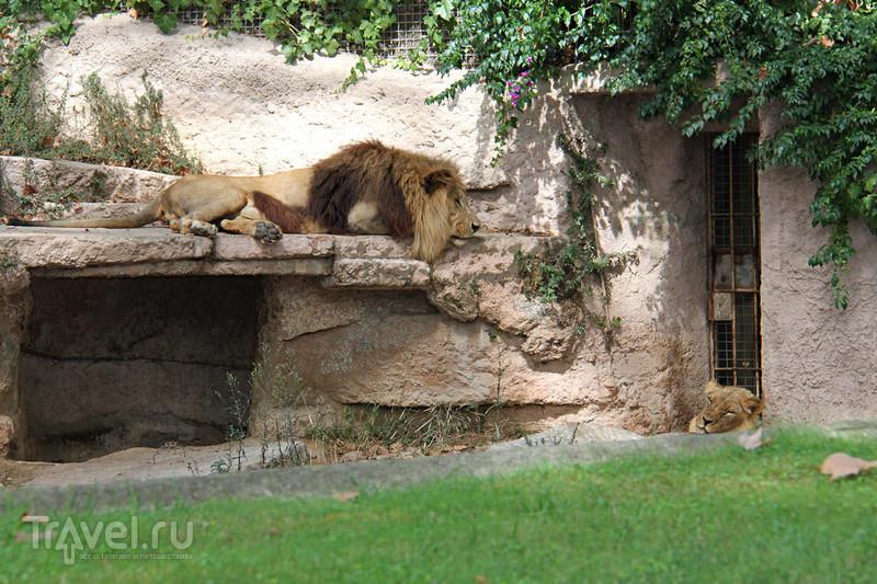 Зоопарк Барселоны / Испания