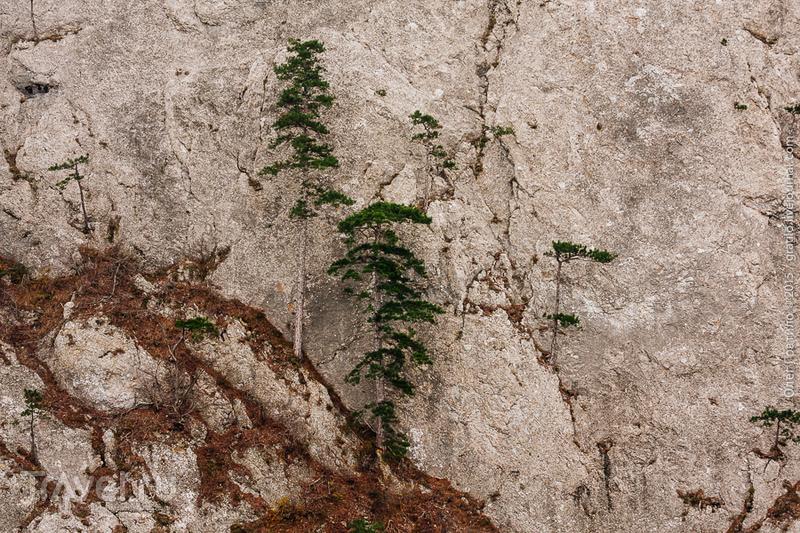 Ильяс-Кая - Байдарская яйла - хребет Донгуз-Орун / Фото из России