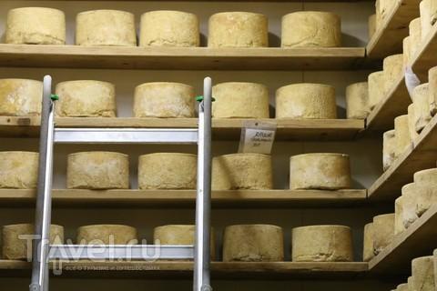 Сырный погреб. Покруче винного / Италия