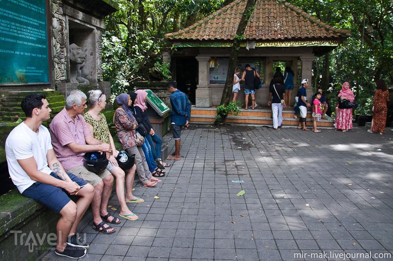 Лес Обезьян, Убуд / Фото из Индонезии