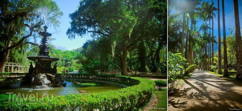 Беззаботный ботанизм в Jardim Botânico Рио де Жанейро / Фото из Бразилии