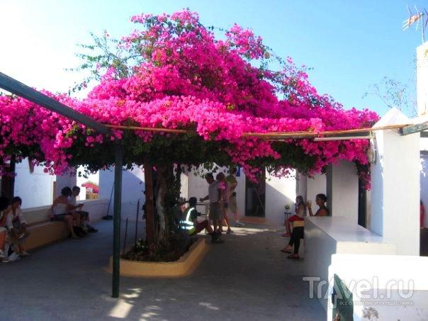Санторини - райская деревушка Ойя / Греция