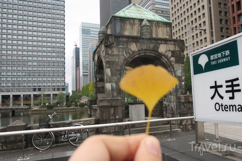 Символ Токио - уникальное дерево / Япония