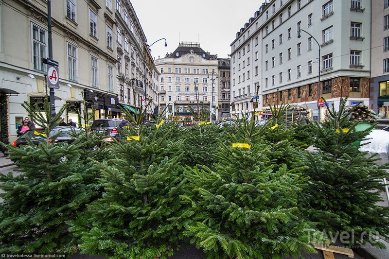 Рождественская Вена под широким углом / Фото из Австрии
