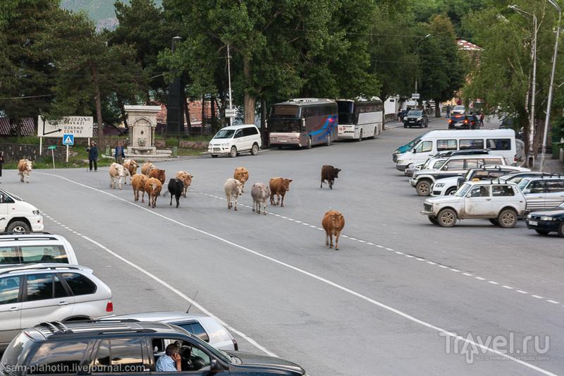 Грузия. Военно-Грузинская дорога / Фото из Грузии
