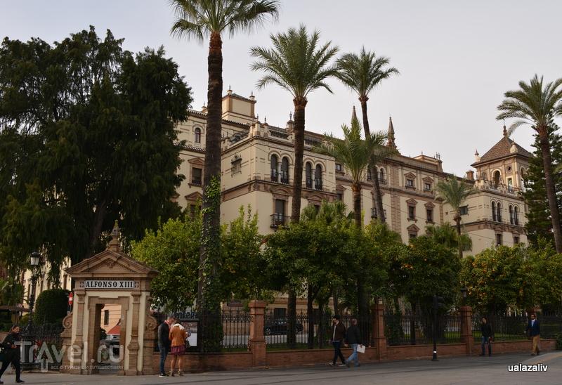 Город апельсиновых деревьев / Фото из Испании