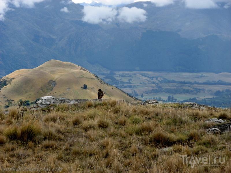 В стране антиподов. Олений парк - там, где снимается кино / Фото из Новой Зеландии