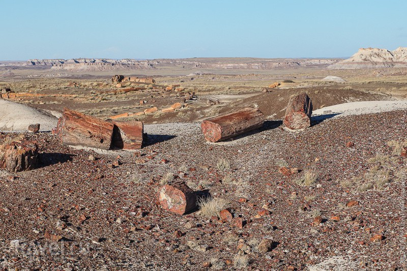 """Национальный парк """"Petrified Forrest"""", США / Фото из США"""