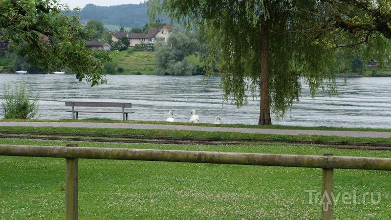Вдоль по Рейну на теплоходе. От Констанца до Штайн-ам-Райн / Фото из Германии