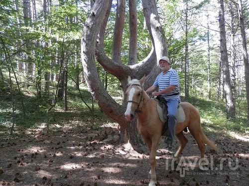 На лошади по окрестностям Ялты / Россия