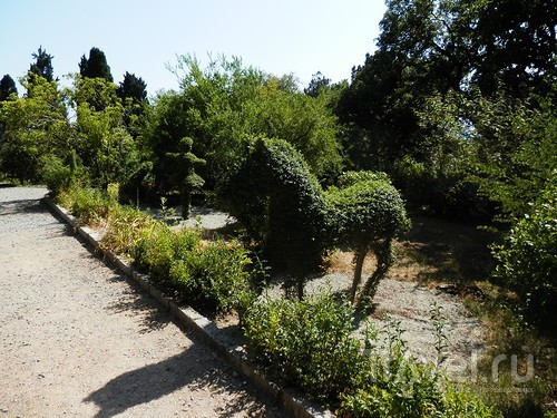 Лето, цветы - Никитский ботанический сад / Россия