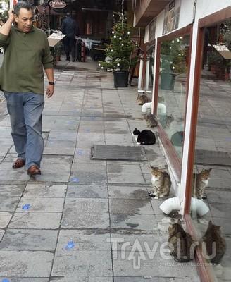 Почему в Стамбуле много кошек? / Турция
