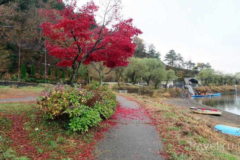 Почему в Японию надо ехать осенью / Фото из Японии