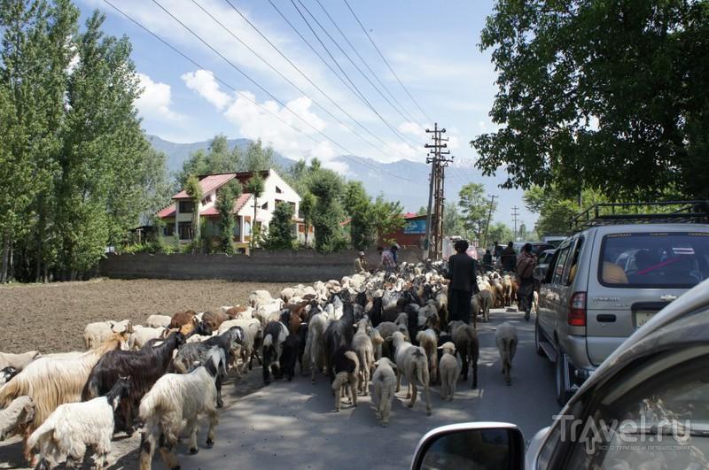 Путешествие по Индии: Шринагар, Кашмир / Индия