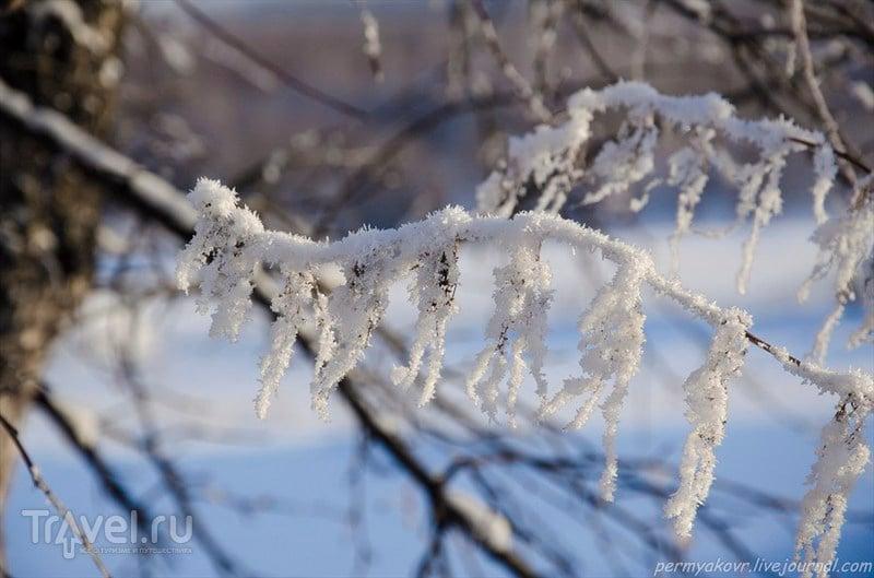 Анжеро-Судженск. В лес на лыжах / Фото из России