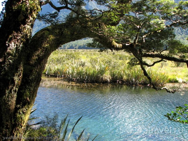 В стране антиподов. Фьордленд - это не только фьорды / Фото из Новой Зеландии