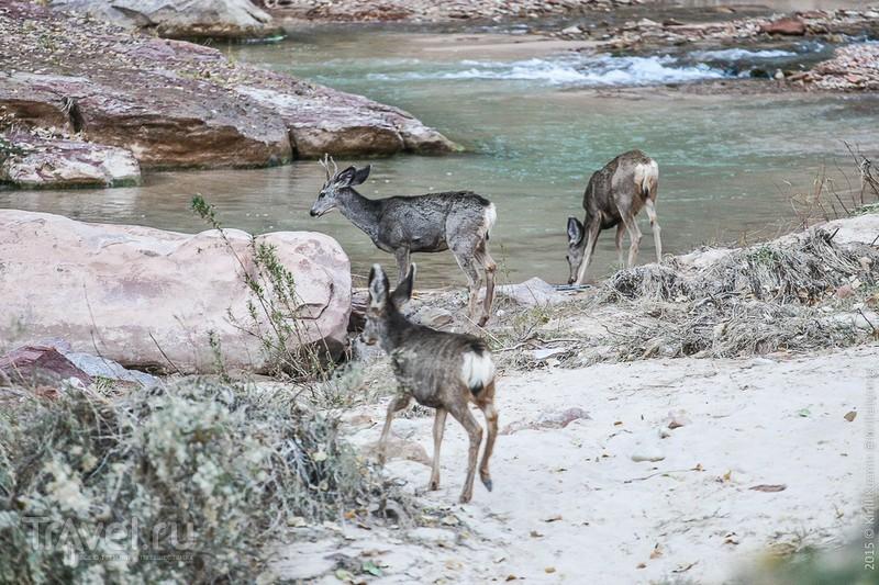 Зайон - национальный парк США / Фото из США